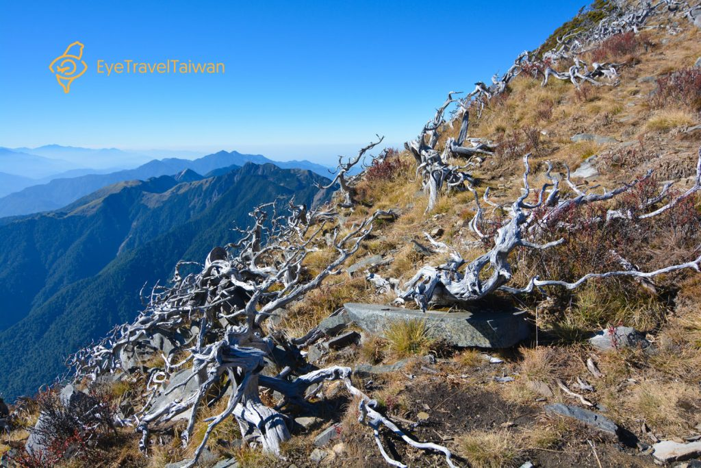 Dead wood in Xueshan Trek